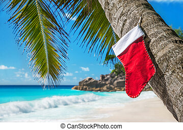 Christmas sock on palm tree at exotic tropical beach Holiday...