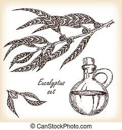 Eucaliptus branch  - vector