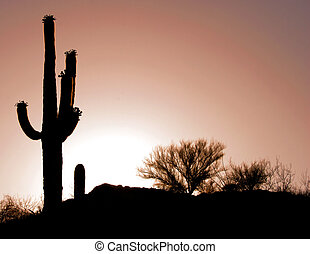 Desert Sunset - Sunset and cactus in the Arizona desert