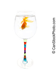 Cramped Living Space - A goldfish whose home has become too...