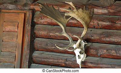 hunting - skull with horns on a hunting lodge