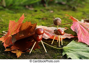 chestnuts animals - chestnuts fun