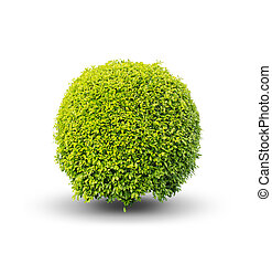 Green bush on a white background .isolated - add Clipping...