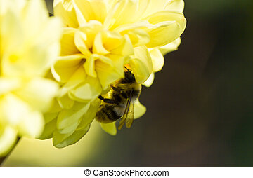 Insect on a flower - Insect on a large flower on a bright...