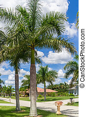 Sunny Florida - Beautiful palm trees on the sides of a...