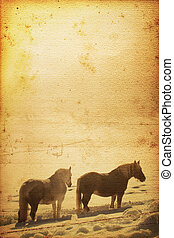 Horse Background - Beautiful horse on old nostalgic...
