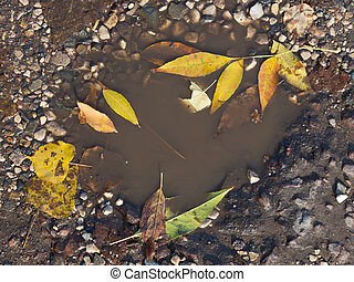 autumn puddle - Autumn puddle on the pavement and yellow...