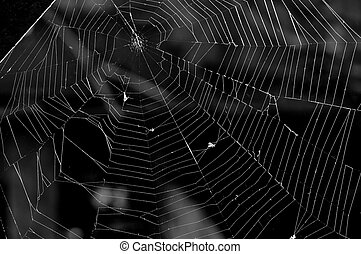 spider web - pretty scary frightening spider web for...