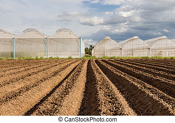 soil preparation for sowing vegetable in field agriculture