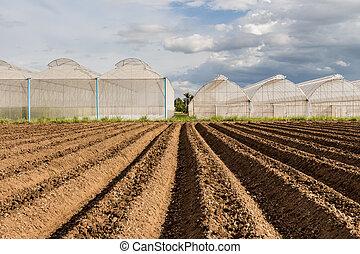 solo, preparação, semear, vegetal, campo,...