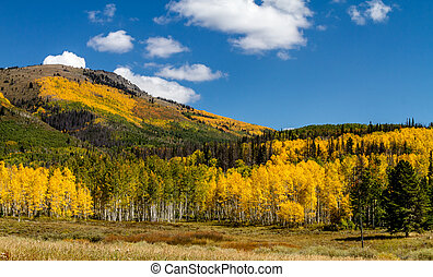 Fall in Steamboat Springs Colorado - Mountain side filled...