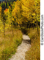 Fall in Steamboat Springs Colorado - Mountain hiking trail...