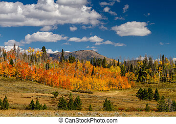 Fall in Steamboat Springs Colorado - View of changing Aspen...