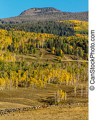 Fall in Steamboat Springs Colorado - Basque sheepherder on...