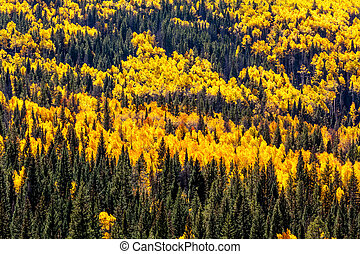 Fall in Steamboat Springs Colorado - Close up of mountain...