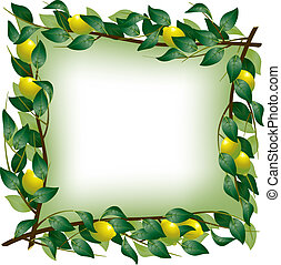 Lemon branch frame - Vector square frame with four lemon...
