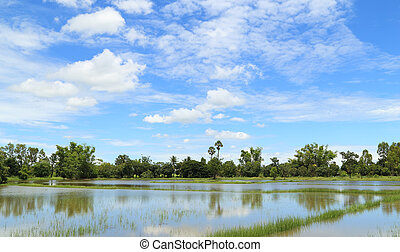 rice fields with blue sky