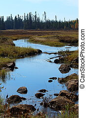 The moose habitat: marshes in the boreal forest of Quebec
