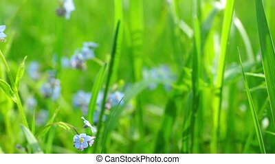 Flower field in sunny day close up - Beautiful view at...