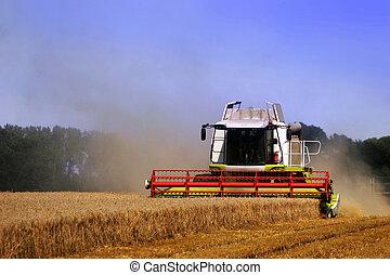 combine harvester - harvest time - a combine harvester...
