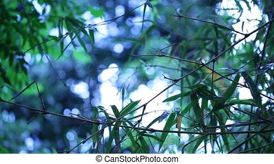 Forest background - Forest leaves and trees in nature