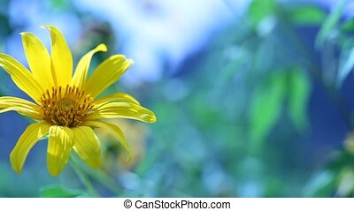 Flower in nature