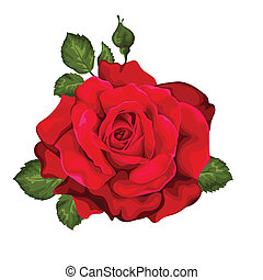 Beautiful rose isolated on white Red rose Perfect for...