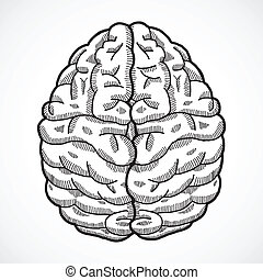 Human brain sketch - Human brain cortex top view sketch...