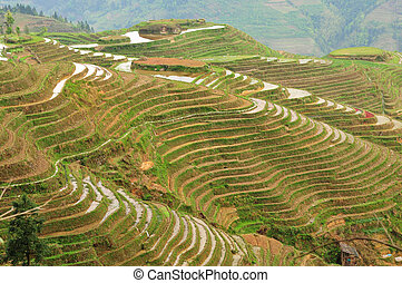 Longji terraces, Guilin, China