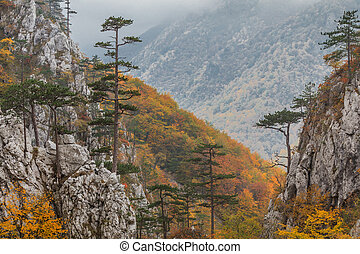 Tasnei Gorge, Romania - Tasnei Gorge protected area in Baile...
