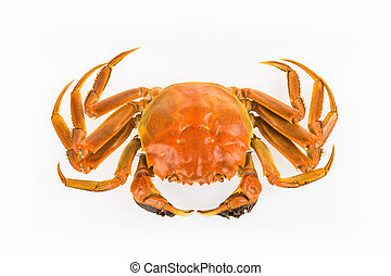cooked crab isolated