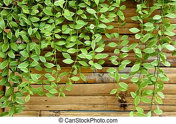 dave plant - dave ornamental plant on bamboo wall