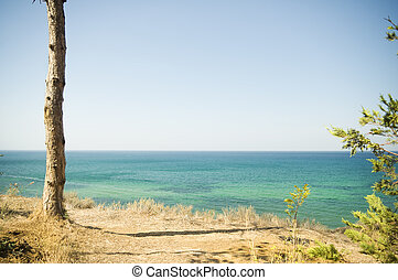 Forest Landscape with Sea