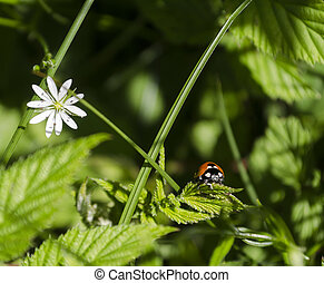 lady bug and flower