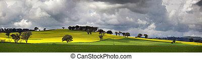 Sunnyside Cowra Landscape Canola Views - Picturesque views...