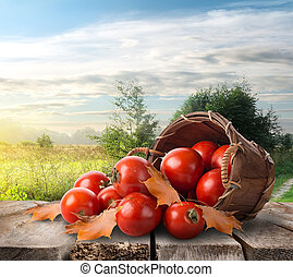 Tomatoes on the table - Tomatoes in a basket on the table...