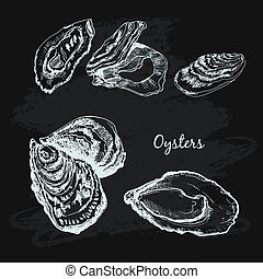 Oysters. Collection of hand drawn graphic illustrations