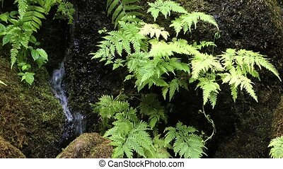 Tropical Plant and Waterfall
