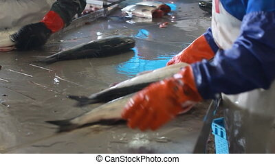 hand deboning salmon - worker´s hand deboning salmon at...