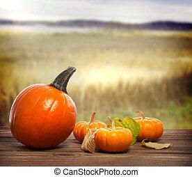 Orange pumpkins with autumn brown field background
