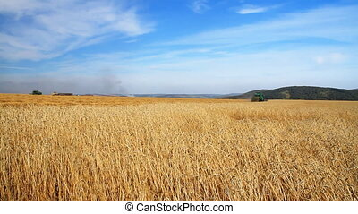 Wheat field - Summer Sunny day Blue cloudless sky Harvester...