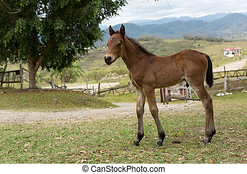 A Mexical foal in the countryside - long legged young foal...