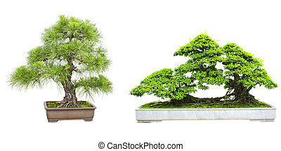 Set of bonsai - Collection of bonsai Isolated on white...