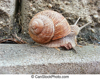 Detail photo of a snail - Detail photo of a land snail...