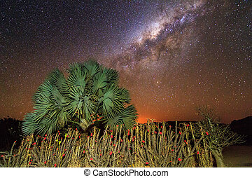 Milky way plants - Some crown-of-christ shrubs and a palm...