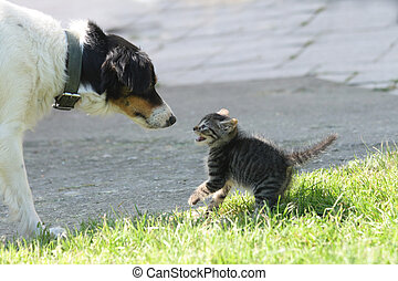 cat and dog dog want to be friend