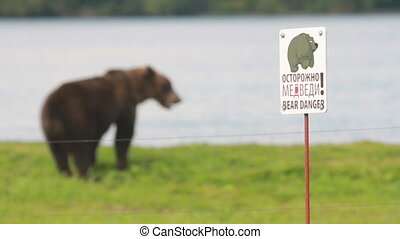 Gently brown bear - Electric fence Gently brown bear