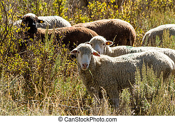 Fall in Steamboat Springs Colorado - Close up of flock of...