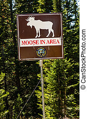 Fall in Steamboat Springs Colorado - Moose in area sign...