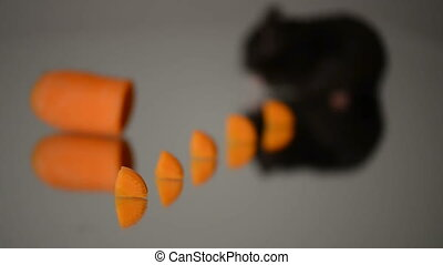 hamster eat carrot